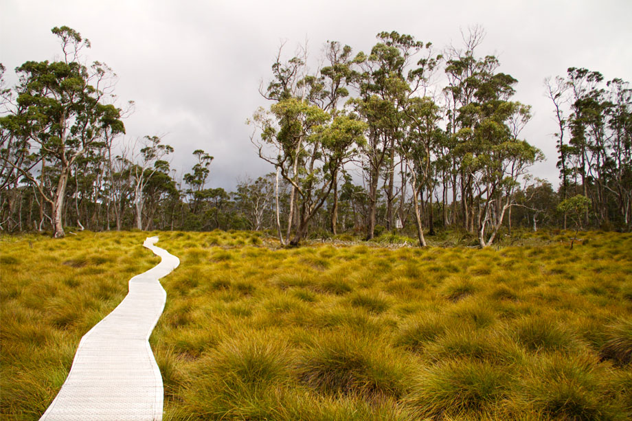 Walking track near Cradle Mountain.